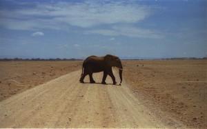 elefante al Parco Amboseli (Kenya)