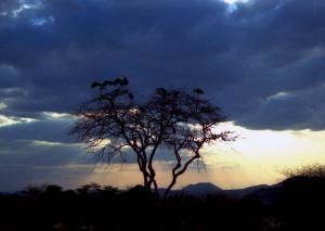tramonto a Tsavo (Kenya)