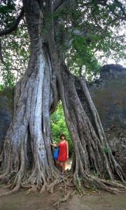 nella foresta a Gede (Kenya)