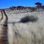 struzzi sul Monte Etjo (Namibia)