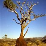 termitaio sul Monte Etjo (Namibia)