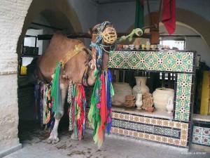 il pozzo a Bir Barouta di Kairouan (Tunisia)