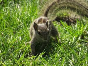 nel Giardino dei Sogni, scoiattolo (Kathmadu, Nepal)