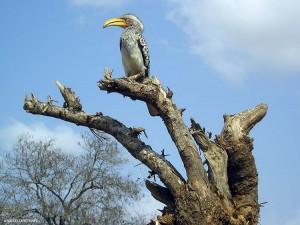 al Kruger Park (Sud Africa)