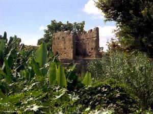 nella necropoli di Chellah (Rabat, Marocco)