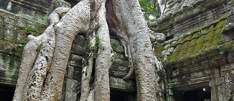 facciata del Ta Prohm (Angkor Wat, Cambogia)