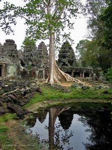la natura nei pressi del Ta Prohm (Angkor Wat, Cambogia)