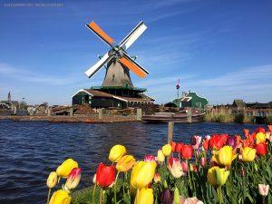 Zaanse-Schans, mulini e tulipani (Paesi Bassi)
