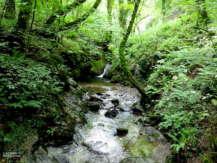 Lydford Gorge (Devon, Inghilterra)