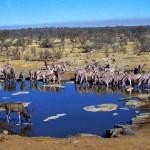 al Parco Etosha (Namibia)