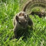 nel Giardino dei Sogni, scoiattolo (Kathmandu, Nepal)